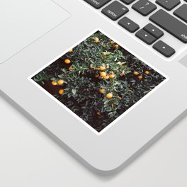 Oranges | Moody colorful travel photography | Botanical green wall with oranges Sticker