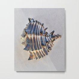 BEAUTIFUL BLUE SEA SHELL - 2 Metal Print