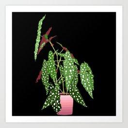 Polka Dot Begonia Potted Plant in Black Art Print
