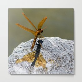 Perched Orange Dragonfly Metal Print