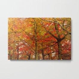 PHOTOGRAPHY / TREES 02 Metal Print