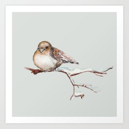 Winter Sparrow 2  Art Print