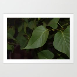 blacked out leaves Art Print