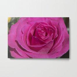 Valentine's Day Roses 30 Metal Print