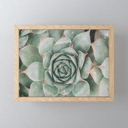 succulent photography Framed Mini Art Print