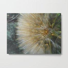 Heaven in a Wild Flower Metal Print