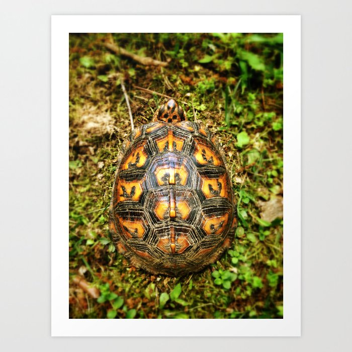 Eastern Box Turtle Shell Pattern Art Print By Dondiart