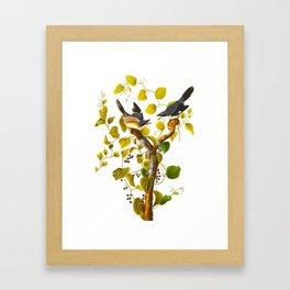 Loggerhead Shrike Bird Framed Art Print