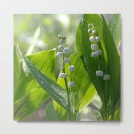 #Lily of The #Valley with #waterdrops on the #leaves Metal Print