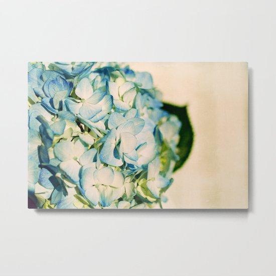 hydrangea II Metal Print