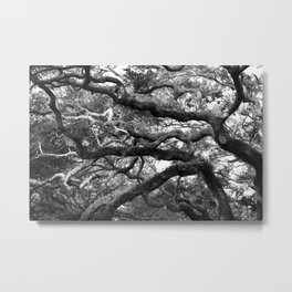 Live Oak Tree - black and white Metal Print