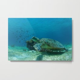 "Turtle saying ""Take my flipper and let us begin our adventure"" Metal Print"