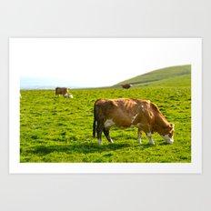 Cow Field Art Print