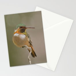 Rufous Hummingbird Stationery Cards