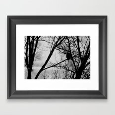 Old Eagle Framed Art Print