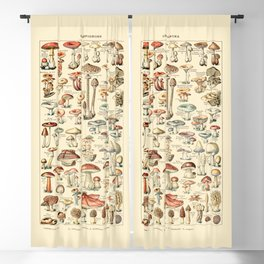 Trippy Vintage Mushroom Chart // Champignons by Adolphe Millot 19th Century Science Artwork Blackout Curtain