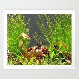 Turtle hiding in the leaves Art Print