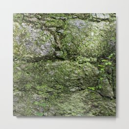 The spring wall Metal Print