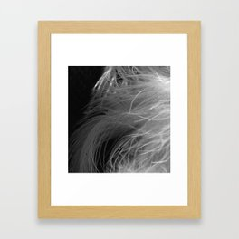 Black and White X Ray Feathers  Framed Art Print