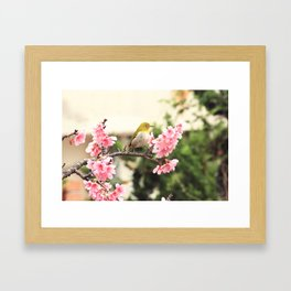 Japanese White Eye 2 Framed Art Print