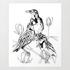 Three Western Meadowlarks Art Print