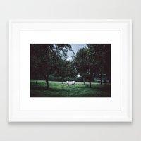 bull Framed Art Prints featuring Bull by Tomas Hudolin