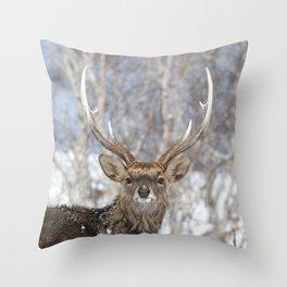 Sika Deer Throw Pillow