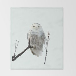 Snowy in the Wind (Snowy Owl 2) Throw Blanket