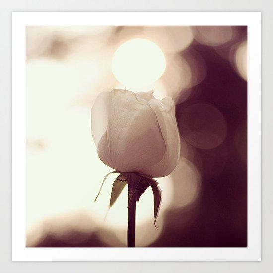 Rose by Dusk Art Print