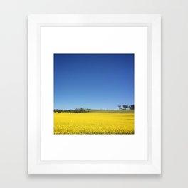 Canola Field Framed Art Print