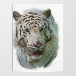 Digital painting of White Tiger portrait Poster