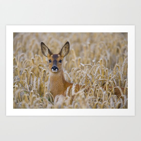 ROE DEER IN WHEAT Art Print