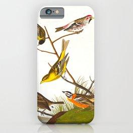 Arkansaw Siskin Bird iPhone Case