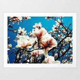 Magnolia details Art Print