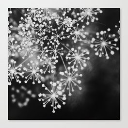 Dill In Black and White Canvas Print
