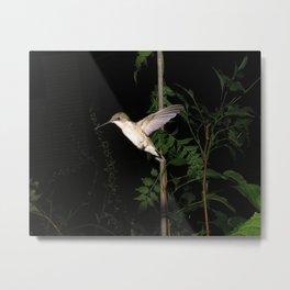 Vine hummingbird 16 Metal Print