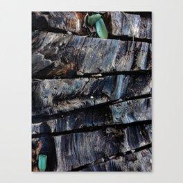 Cut tree Canvas Print