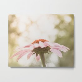 Pink Glow in the Sunlight Metal Print