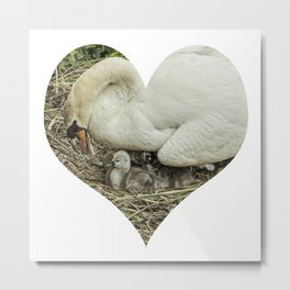 Mother Swan III Metal Print