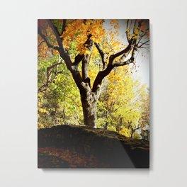 Yellow foliage Metal Print
