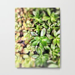 Fat Plants Metal Print