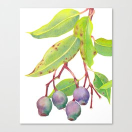 Gumnuts - Watercolour Canvas Print
