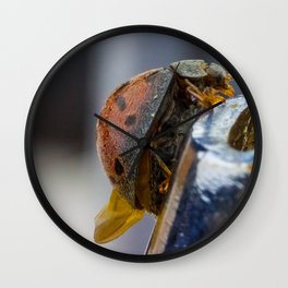 super magnification of a tropical ladybird Wall Clock