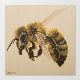 Bee IV (Leon) Canvas Print