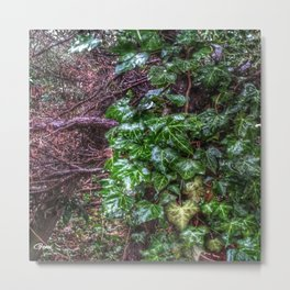 Gnarled vines & Ivy on a Misty Day Metal Print