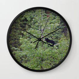 Black bear in a tree in Jasper National Park | Canada Wall Clock