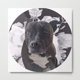 Harlo the staffy Metal Print