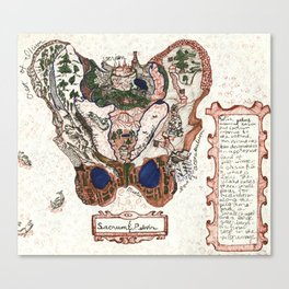Sacrum & Pelvis Canvas Print