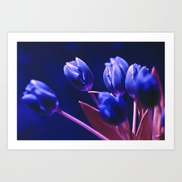 Blue Poetry of Tulips Art Print