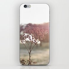 country sunset iPhone & iPod Skin